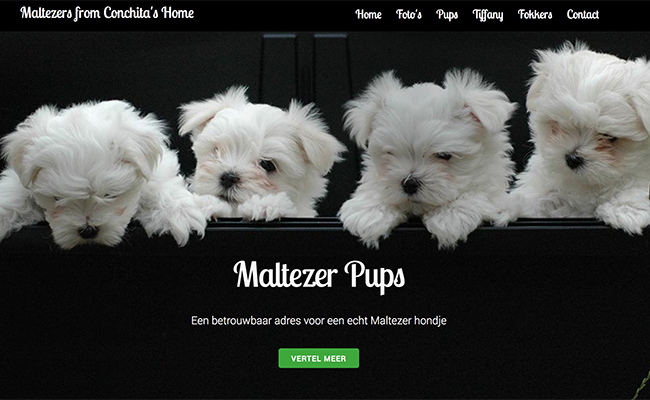 Afbeelding website Maltezers from Conchita's Home